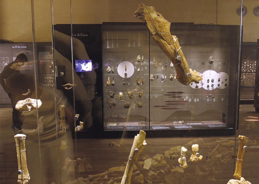Musée National de Préhistoire_muséographie